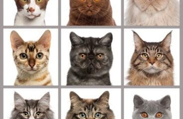 Health And Wealth: Celebrate National Cat Day With CBD Products